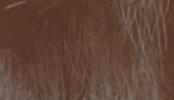 Mutalista marrón