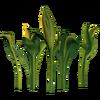 Солнечный Зеленоцвет вики