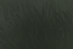 Carnicero verde