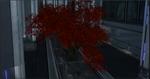 CBspringmapletree