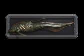 FishTrophyCharcEel