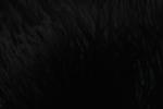 Maníaco negro kavat