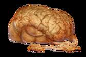 Cerveau de Norg