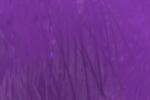 Darvo púrpura kavat
