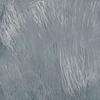 Corpus Grey