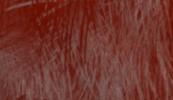 Ogris rojo