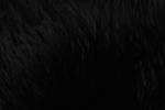 Negro Maníaco