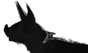 CollierKubrow
