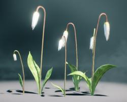 SunlightDragonlily
