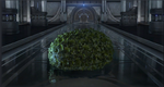 CBLarge Topiary Bush