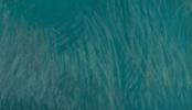Embolista azul