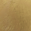Corrupted Gold