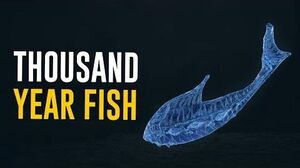Thousand Year Fish & All You need to Know! (Warframe)