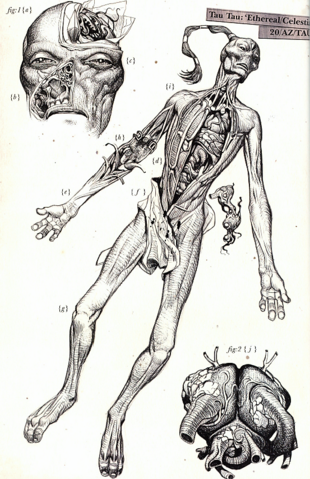 File:EtherealDissection.png