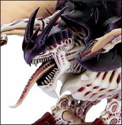 Harpy closeup