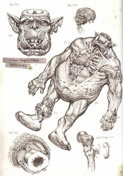 Ork Post-Mortem Sketch
