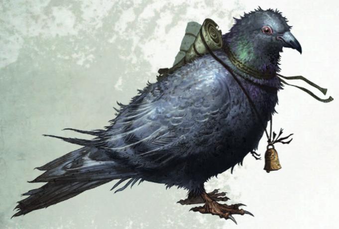 Homing Pigeons   Warhammer Wiki   Fandom