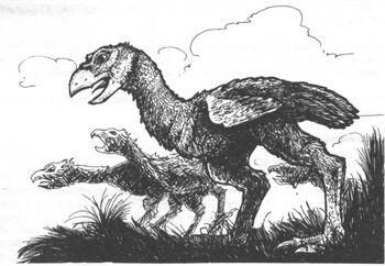 Culchans 2nd Edition illustration