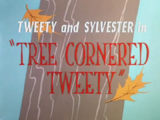Tree Cornered Tweety