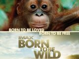 Born to Be Wild (2011 film)