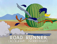 Beep, Beep Road Runner's Latin Name