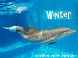 Winter (dolphin)