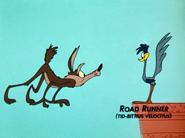 Beep Prepared Road Runner.'s Latin Name