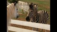 Stripes meets Sandy