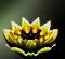 Gold Lotus.jpg