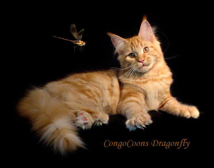 Hollowclan Warrior Cat Clans Wiki Fandom Powered By Wikia