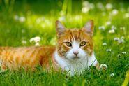 400px-Cat in grass