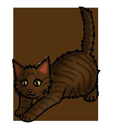 Donskit (DC).kitten