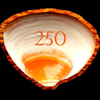 250Schelpbadge