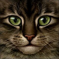 0-00026-warrior-cat-33.jpg