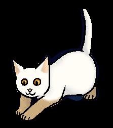 Moeraskit (NP).kitten