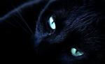 Nachtster.afbeelding