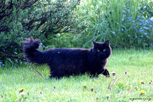 Donkere Snor.afbeelding