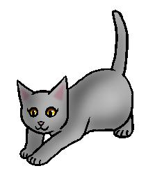 Moskit (NP).kitten