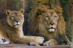 Leeuw-en-leeuwin
