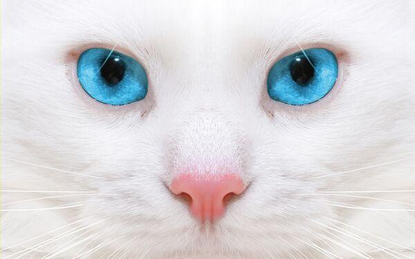 Banner witte kat