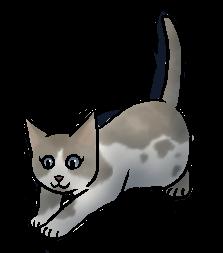 Moskit (BV).kitten
