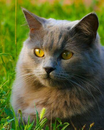 Shasta Warrior Cats Oc Wiki Fandom