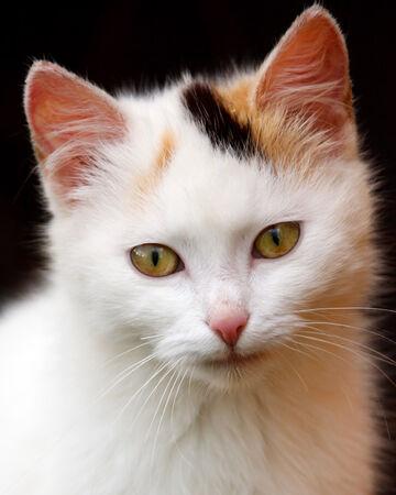 Honeypelt Warrior Cats Oc Wiki Fandom