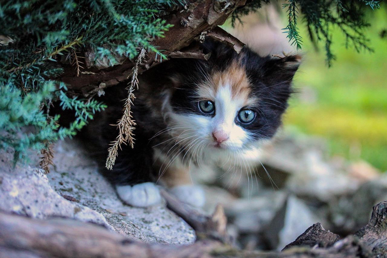Tinykit Warrior Cats Oc Wiki Fandom