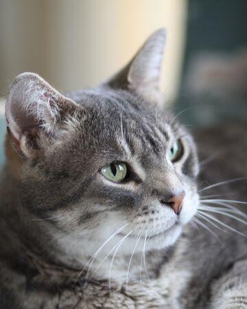 Stoneheart Warrior Cats Oc Wiki Fandom