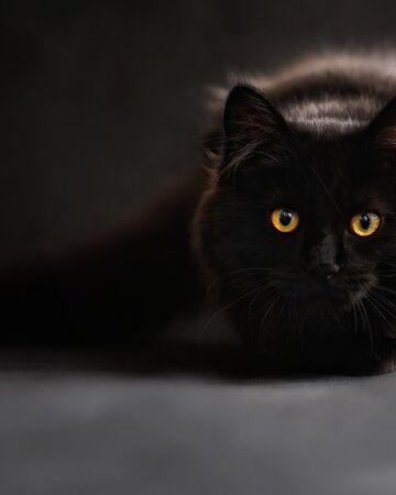 Hollysong Warrior Cats Oc Wiki Fandom