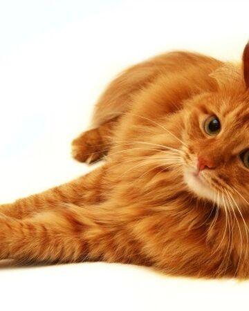 Finchflight Warrior Cats Oc Wiki Fandom