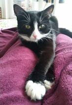 Black-cat-with-rare-albino-condition-turns-into-a-white-cat-in-3-years-5c6e0537e847c 700