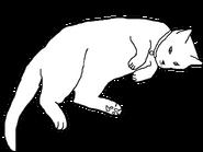 Hauskätzchen Kurzhaar W