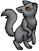 Harrykit.Kittypet